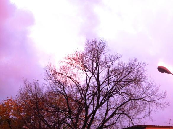 2.12.2012 nuvole viola