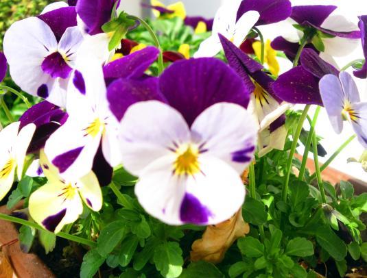 6.4.2013 violette