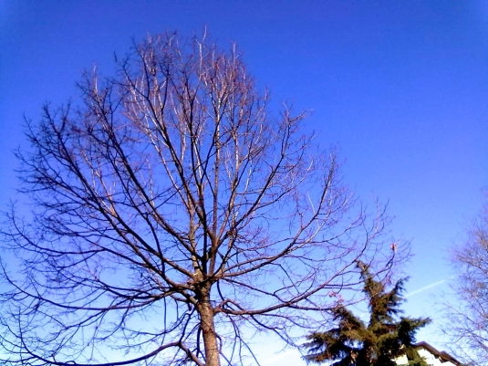 13.2.2014 alberi via Maragliano