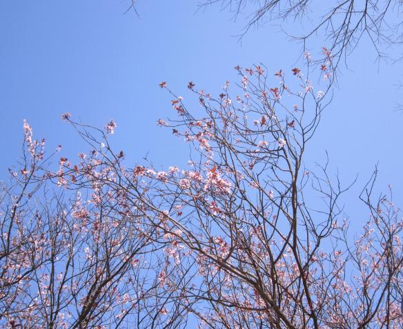 13.3.2014 fiori e rami