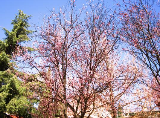 13.3.2014 fiori rosa verde rami