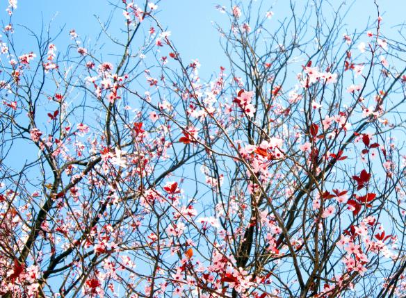 13.3.2014 fiori rosai