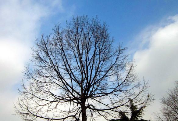 17 albero spoglio