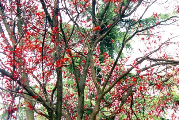 17 foglie rosse