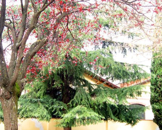 17 giardino foglie