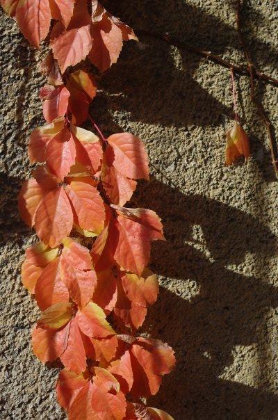 Giacomo Alpini foto di foglie novembre 2009