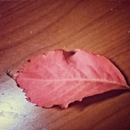 3 ottobre foglia rossa