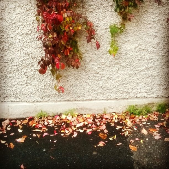 16.11.2014 foglie rosse pioggia