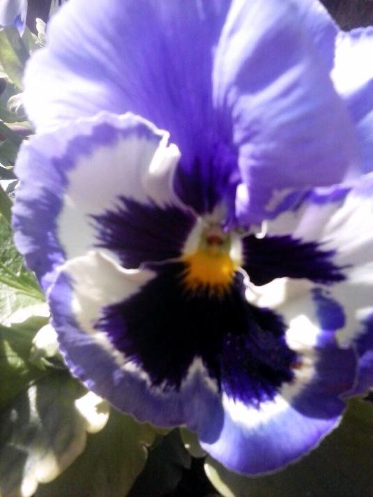 22 Aprile 2015 Viola in sms