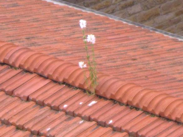 1 maggio 2015 fiori sul tetto della chiesa
