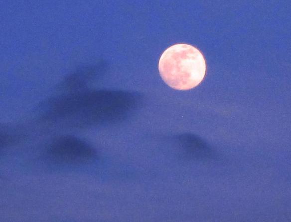 2 Luna2