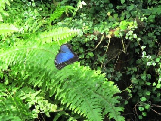 22.9.2015  Collodi Casa delle farfalle12