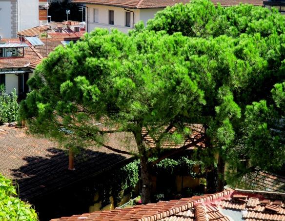 6.9.2015 pino tra i tetti