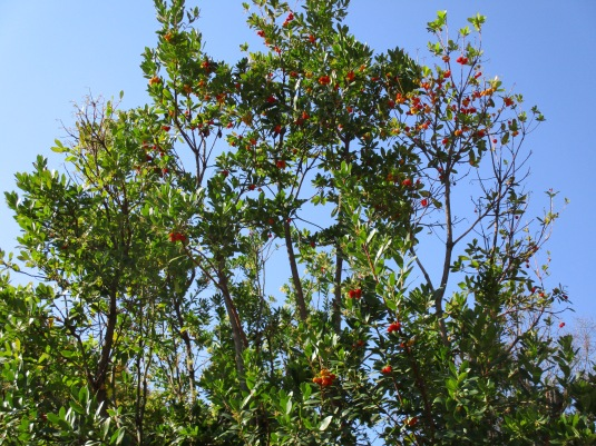 1.11.2015 al giardino bacche e foglie
