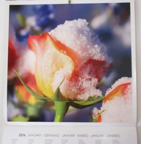 1.1.2016 fiori in camera