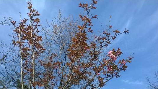 27 marzo rami fioriti