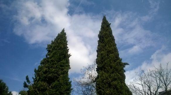 29.3.2016 alberi e nuvole giardino maragliano