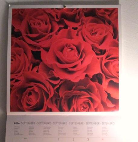1 Settembre 2016 rose rosse