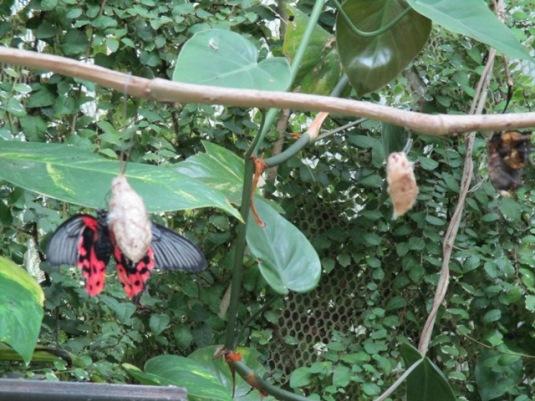 22.9.2015 Collodi Casa delle farfalle13