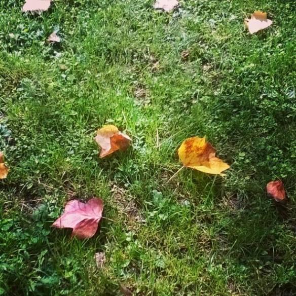 18-settembre-2016-foglie-sul-prato