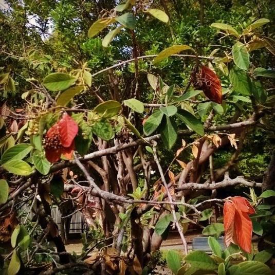 20-settembre-2016-foglie