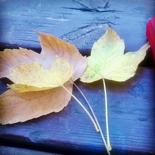 29-settembre-2016-foglie-a-colazione