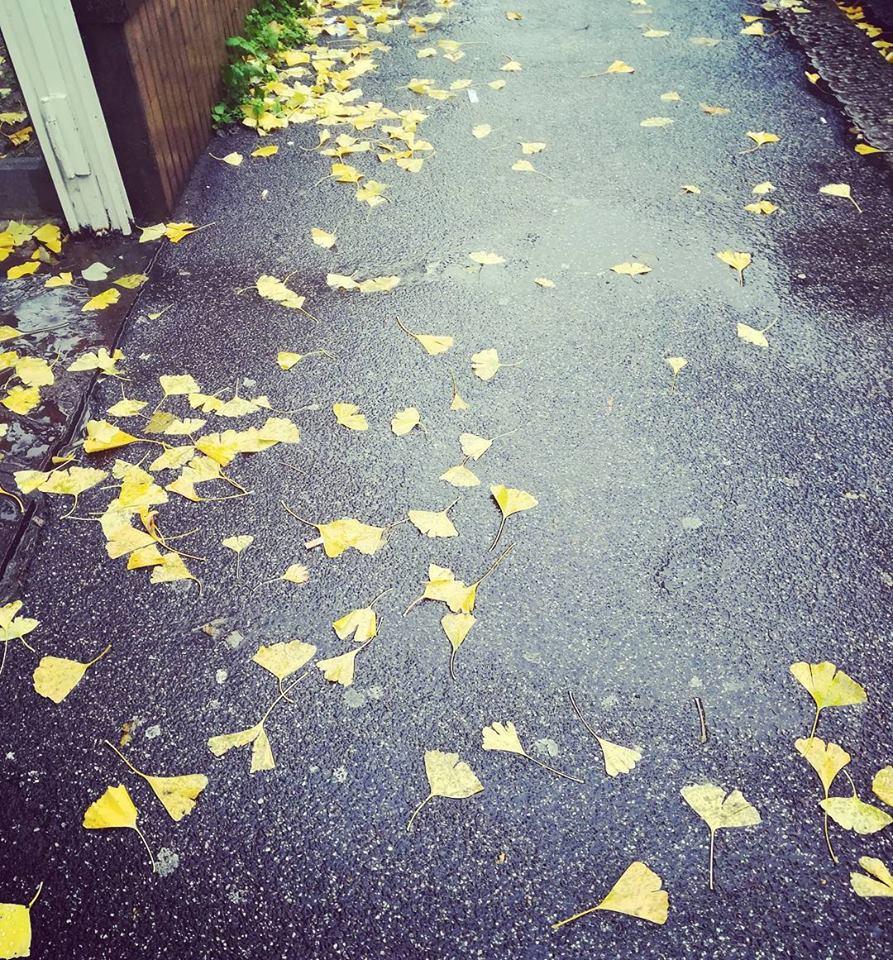 8 dicembre 2017 foglie per via