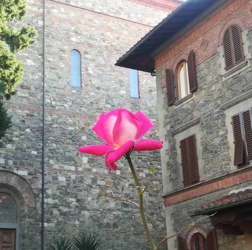 rosa a san Jacopino 18.10.18
