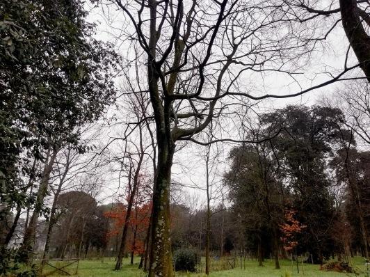 1 febbraio 2020 rami e foglie